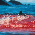 Come il sangue per gli squali